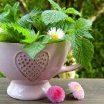 Продукты для очищения организма – 9 лучших