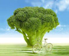 polza-brokkoli-dlya-organizma