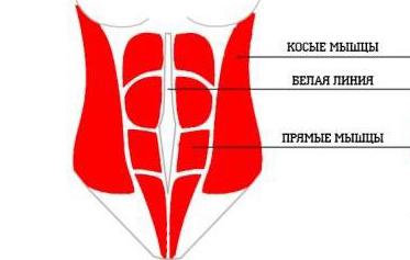 kak-nakachat-bokovoj-press